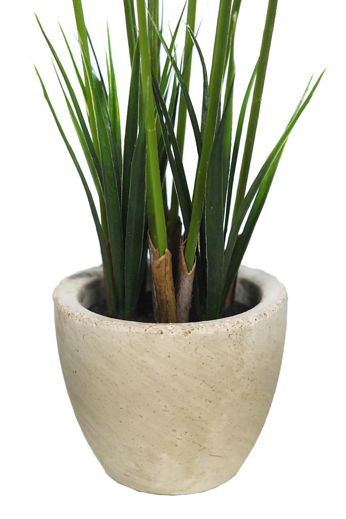 Planta papiro en maceta de cemento 50cm - Maceta de cemento ...