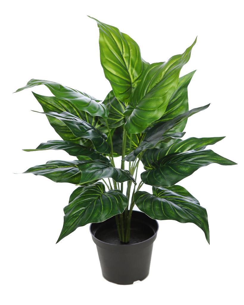 Planta en maceta lirio 45 cm - Plantar en maceta ...